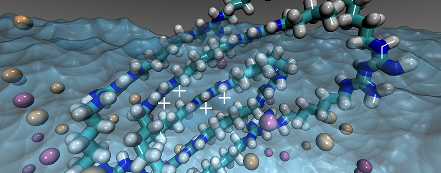 A molecular diagram showing the self-assembly of polyhexamethyl biguanide in water
