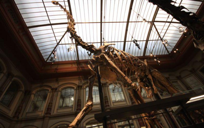 Brachiosaurs skeleton
