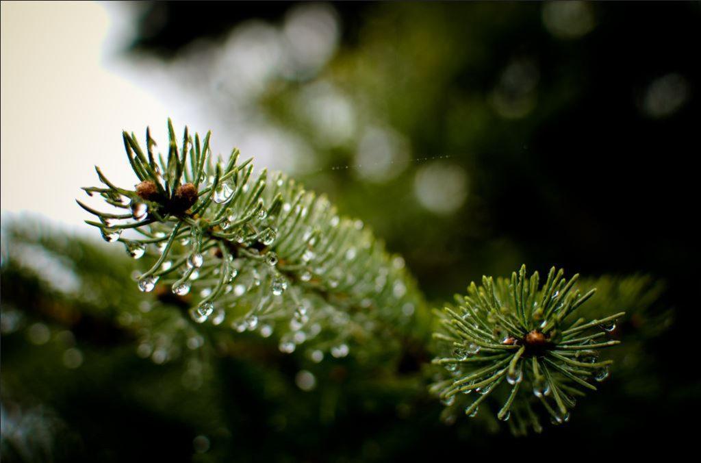 wet tree