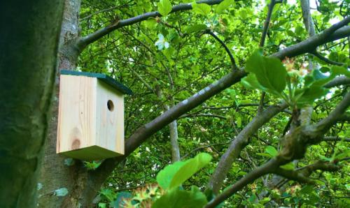 Bird Box in Platt Fields